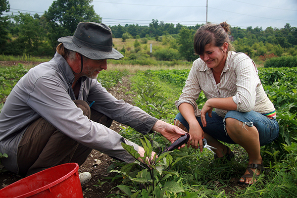 Two people picking vegetables