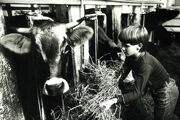 Cow and child in barn