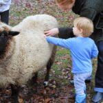 Child petting sheep