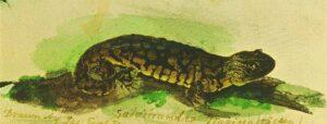 just_salamander