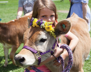 Calf club student on May Day with her calf wearing flower crown