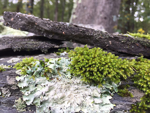 Moss and lichen in the forest