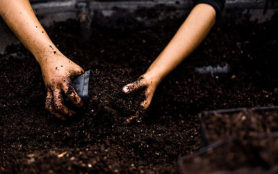Living Soils for our Earth, our Community, and Ourselves (Part 1)
