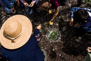 students working together in Hawthorne Valley Farm's Children's Garden