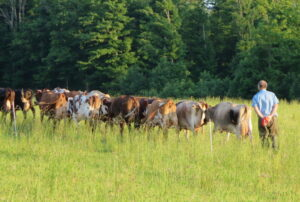Side Hill Farm's Dairy Herd at pasture