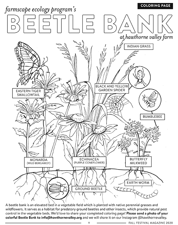 Beetle Bank Coloring Page