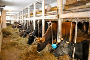 Hawthorne Valley Farm milking barn